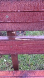 IMG Cow damaged seat 1 - Copy
