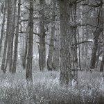 Landscape 14 by walter huber