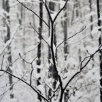 Landscape 26 by walter huber
