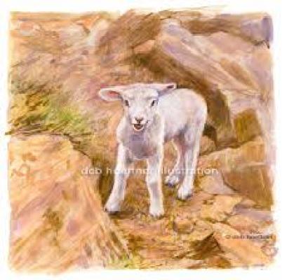 lost-lamb