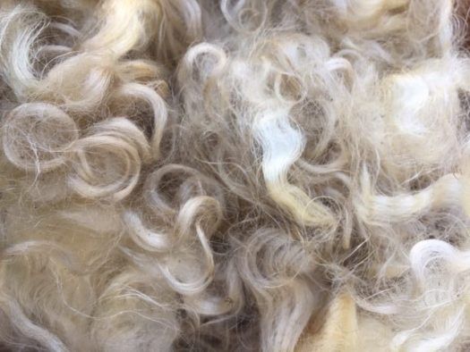 Close-up of white wool locks