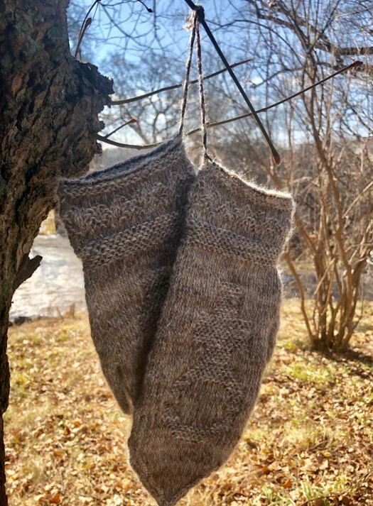 A pair of twined knitting mittens hanging from a tree branch.