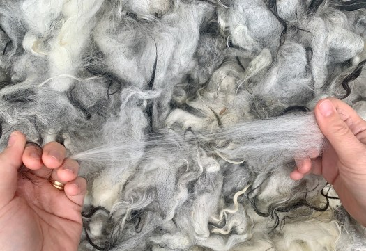 The wool is my teacher. Through trusting my hands to investigate the wool I will learn how it behaves and wants to be spun.