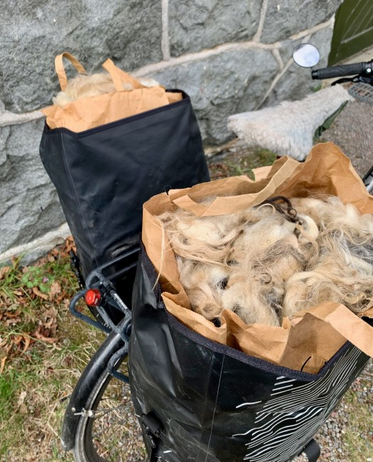Two bags full! Gunvor's first and second fleeces ride safely home with me.