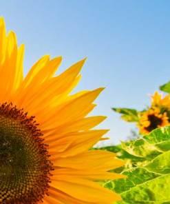 Allergies & Hay Fever