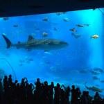 沖縄美ら海水族館の割引・お土産・所要時間は?無料入館日もある!?