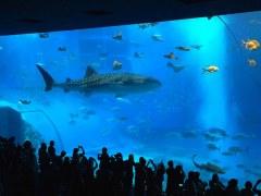 沖縄美ら海水族館の入場料は?割引は?お土産は?所要時間は?