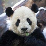 上野動物園の割引・無料入園日・料金をチェック!混雑状況は?