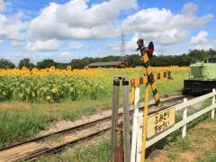 成田ゆめ牧場は雨の日などに割引あり!入場料とアクセスもチェック!