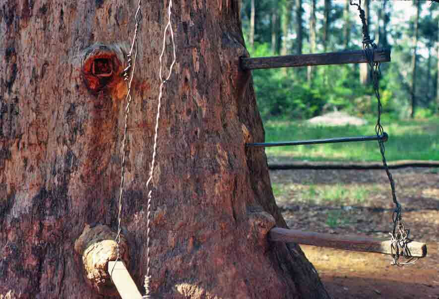 Pegs in Gloucester Tree