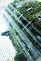 The Cloud Forest, Gardens by the Bay