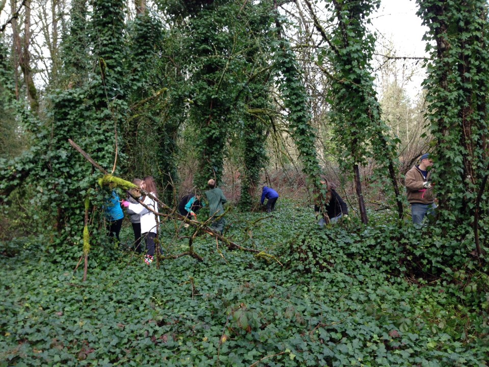 Ivy Pullers