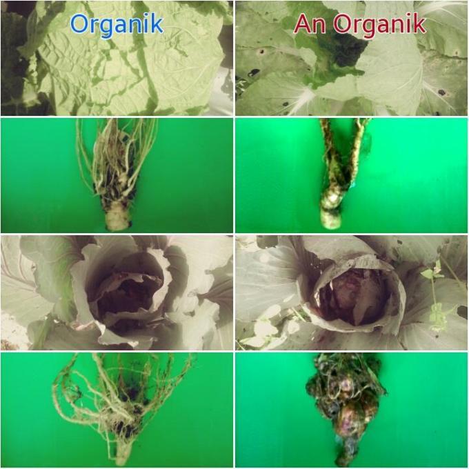 Manfaat Pupuk dan Peptisida Organik Terhadap Pertumbuhan Sayuran dan Tanah