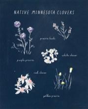"""Native MN Clovers,"" Dana Kristine Koehler"