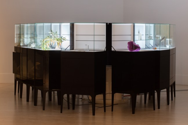 Large display boxes holding scientific and biological specimens stand alongside each other in the middle of the room.