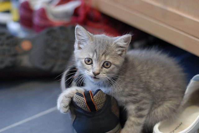 chat chaussure
