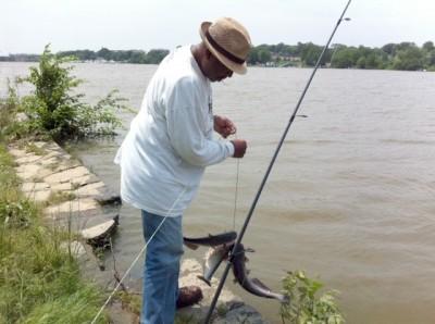 Catfish in the Anacostia