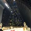 夜空の下で繰り広げられていたのはアクアリウムだけではなかった! お茶席セットと20週年を迎えた京都駅ビルクリスマスイルミネーション♡