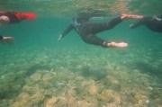 clutha swim (1)