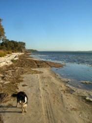 Peel Estuary with Bess