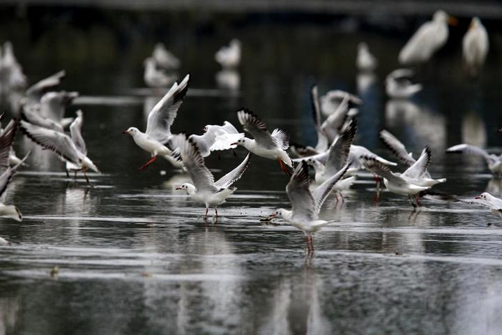 dongshan-river-resort-farm-bird