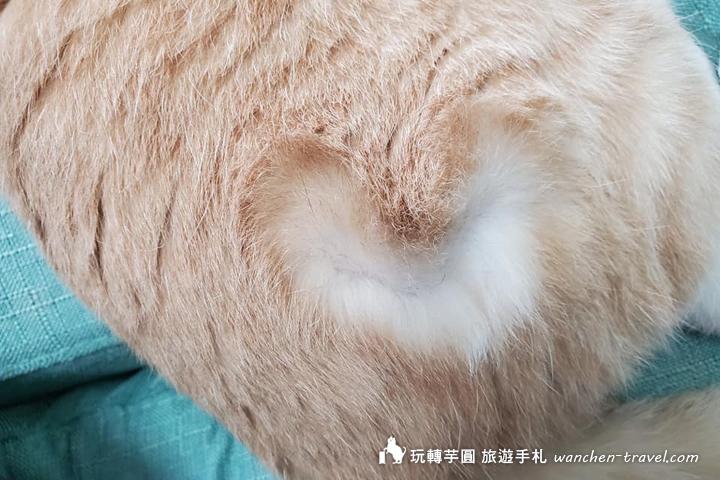 cat-(11)