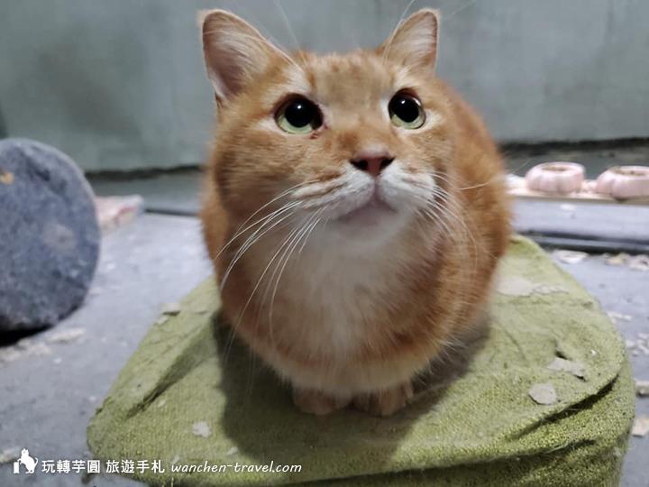 cat-(8)