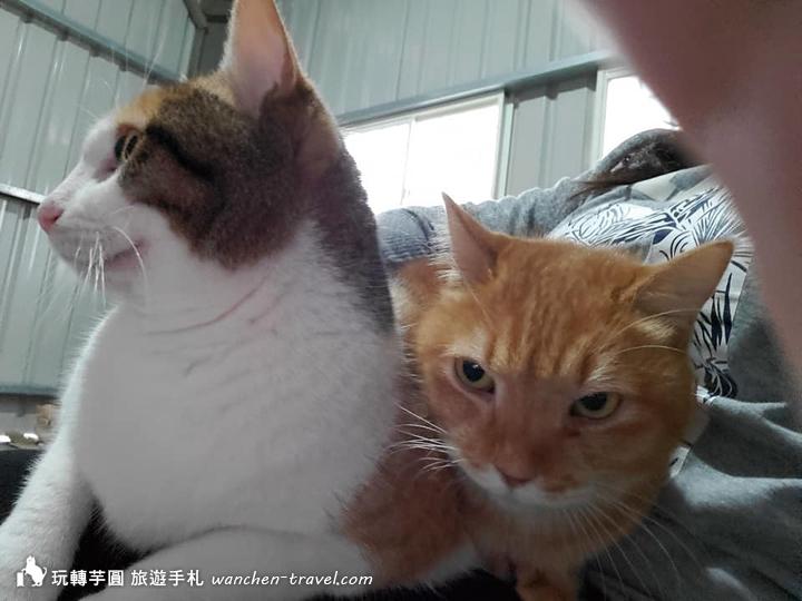 cat-(9)