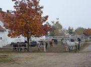 Kierzbuń horse farm