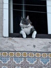 Lisbon's Mouraria neighborhood cat