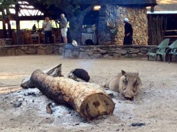 Mlilwane warthog