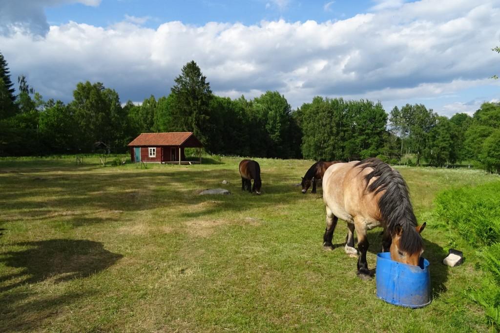 platteland Värmland Zweden