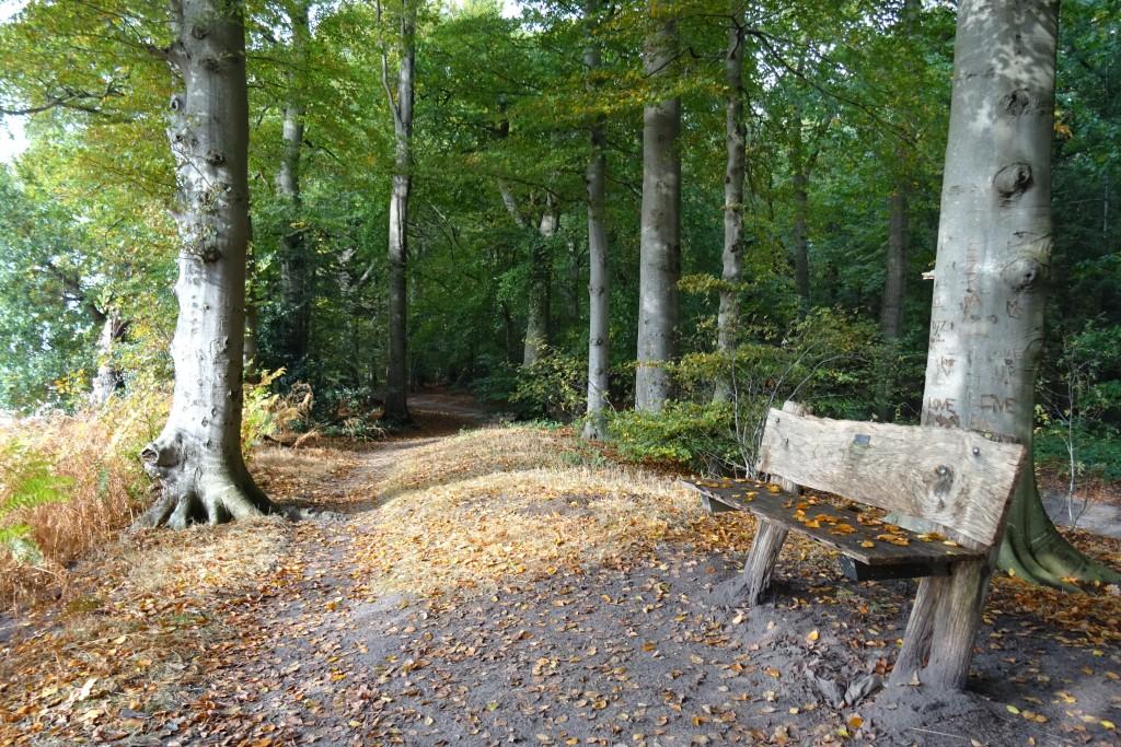 Landgoed Fraeyelemaborg herfst