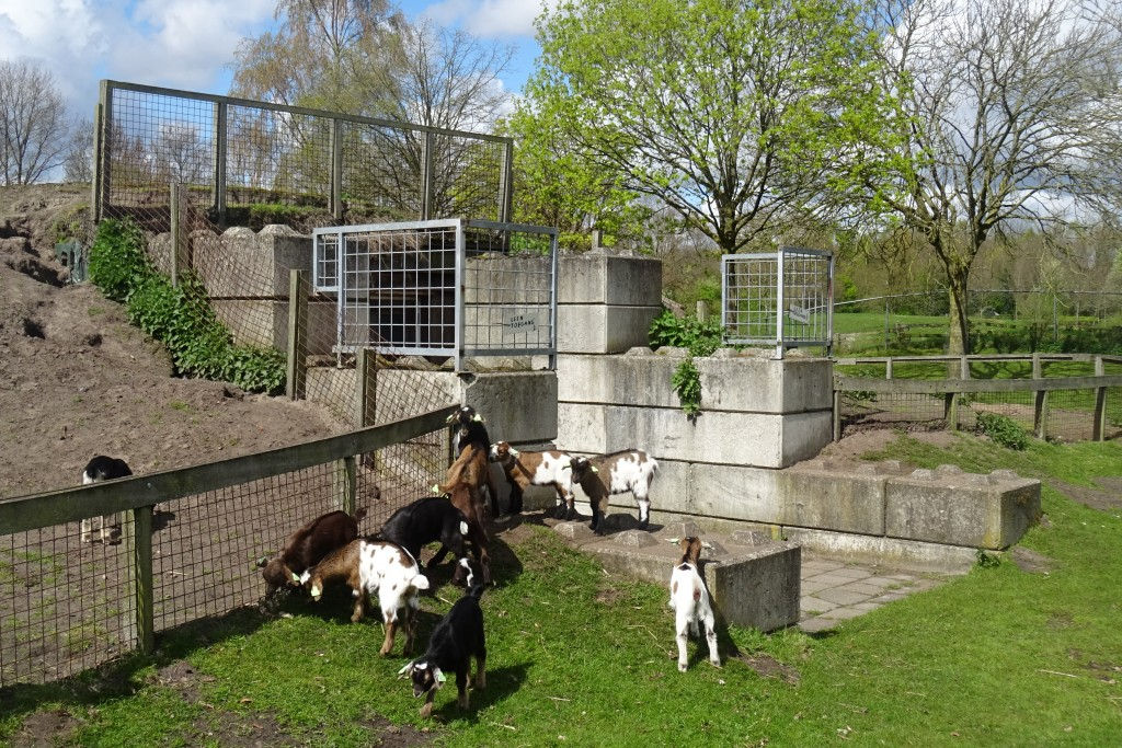 Kinderboerderij Borgerswold lente