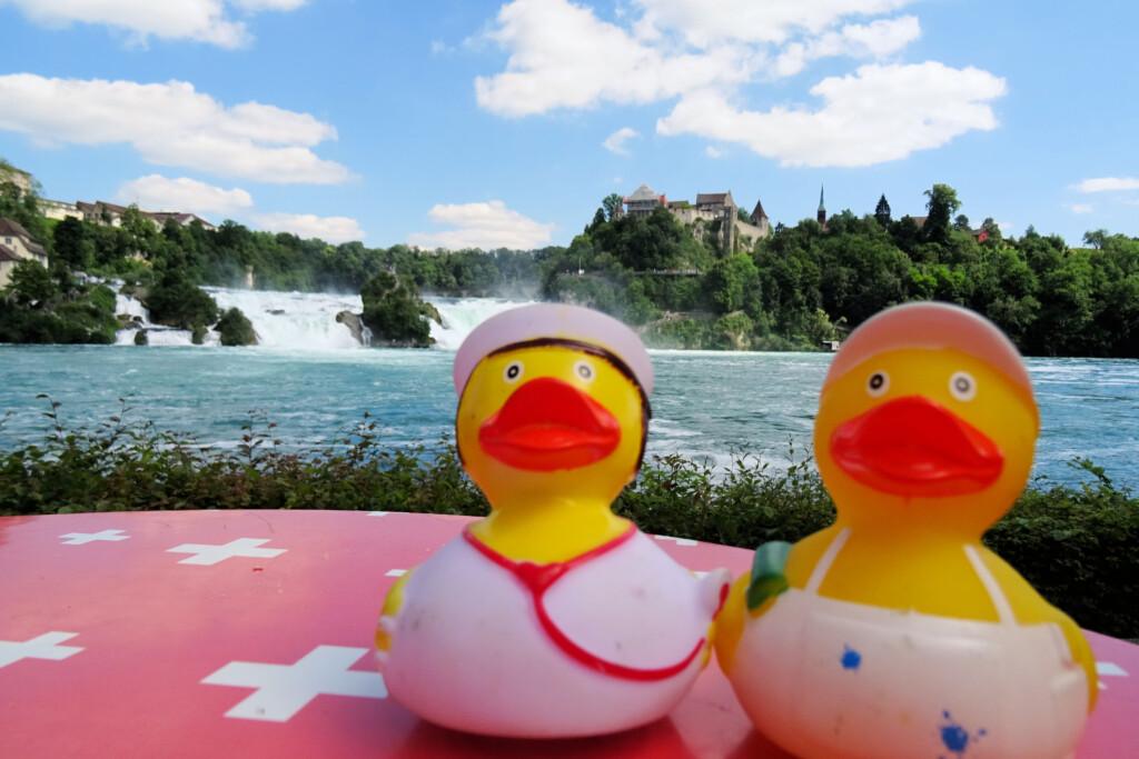 badeendjes Reinfall Zwitserland