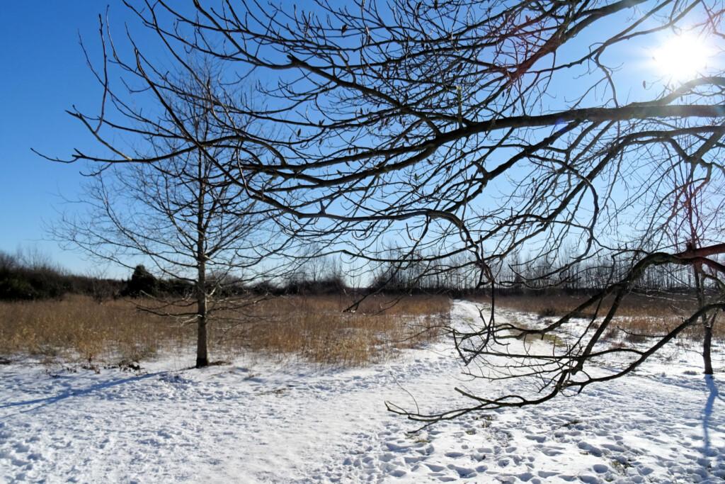 natuur winter De Heemtuin
