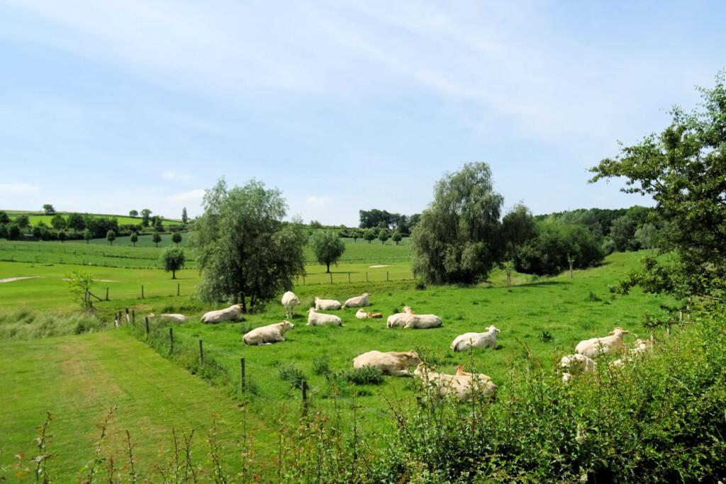 Eys Zuid-Limburg
