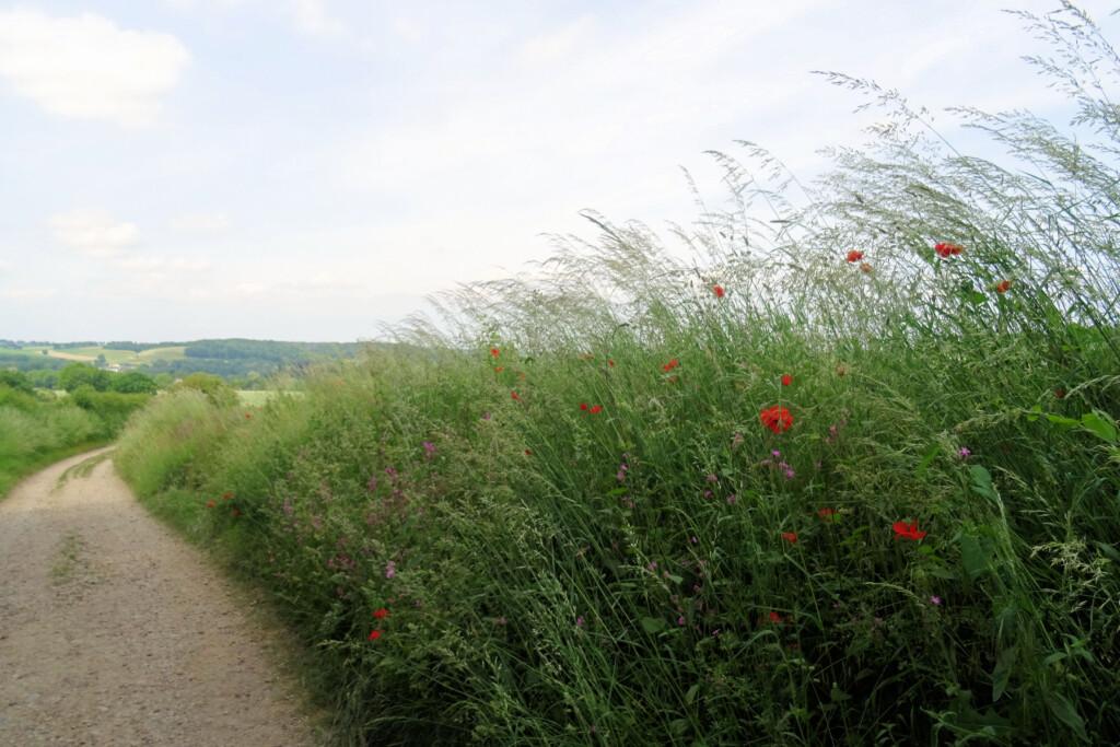 wandelen rondom Eys Zuid-Limburg