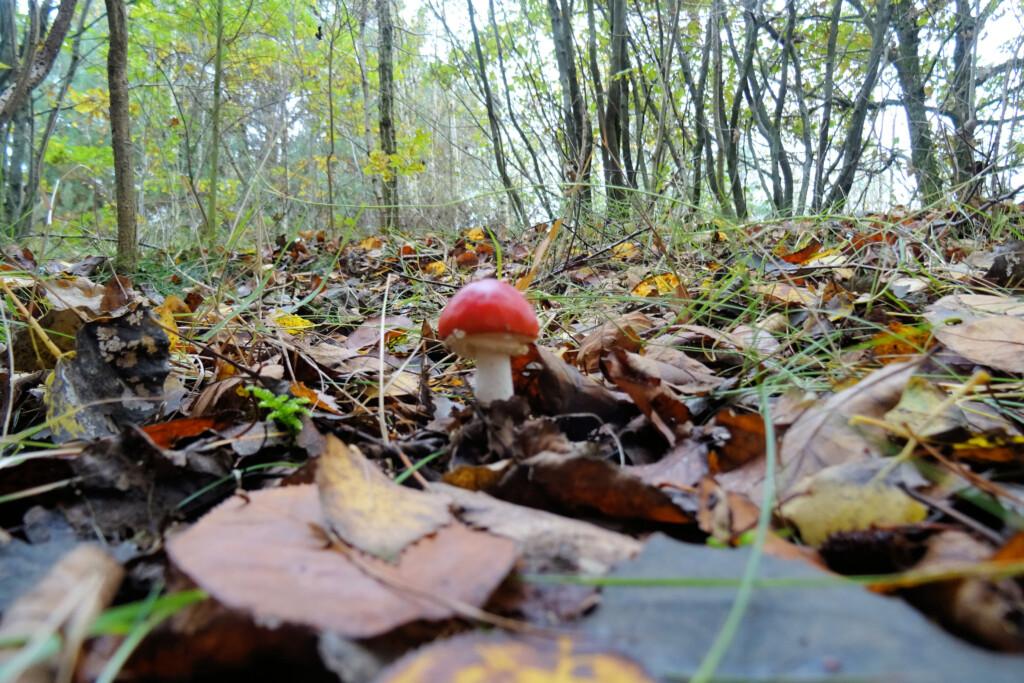 paddenstoelenjacht