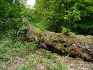 Wandeling Wolfheze: Duizendjarige Den