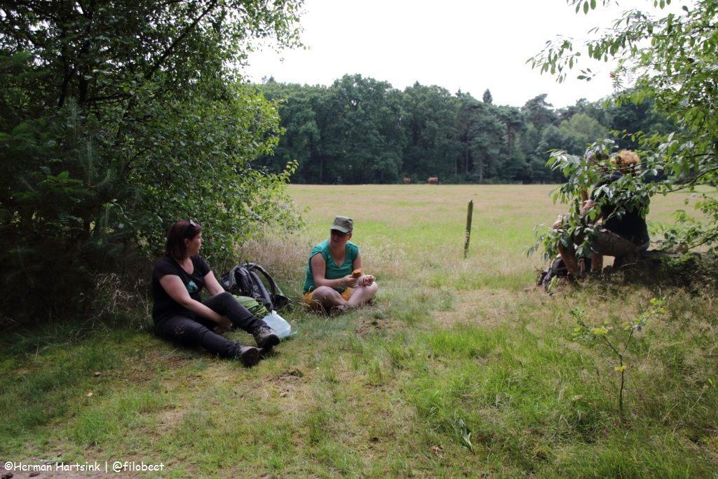 NS Wandeling Utrechtse Heuvelrug rust