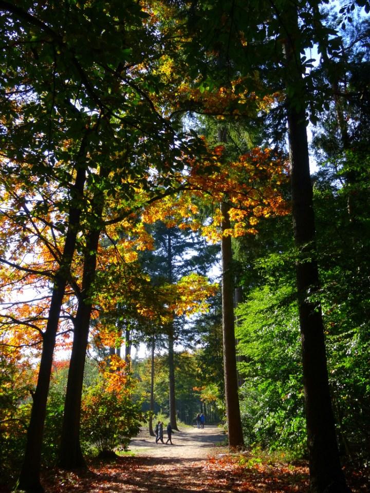 Herfst - NS Wandeling Mastbos
