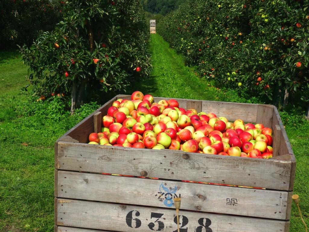 Appels - Wandelen Vuursteenroute