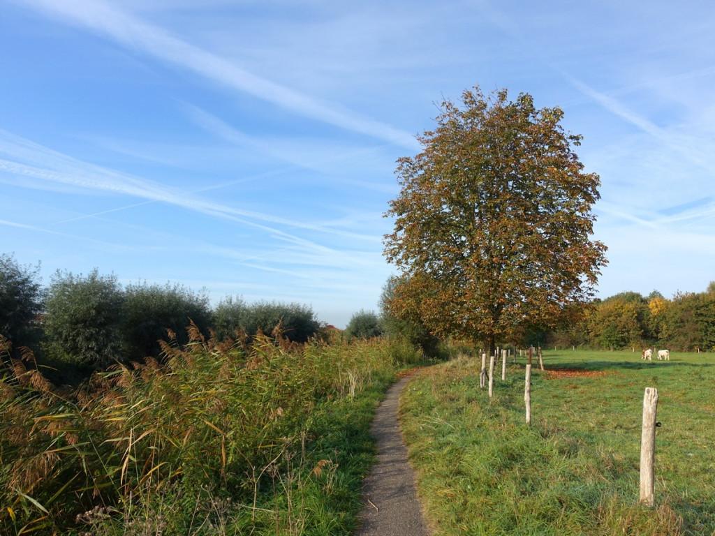 Pad langs Kromme Rijn