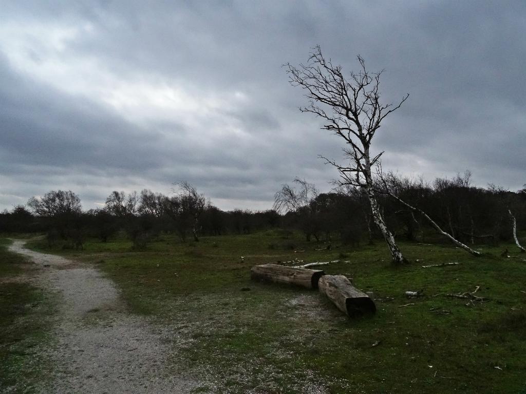 Boombank - Kroegloper NP Zuid-Kennemerland