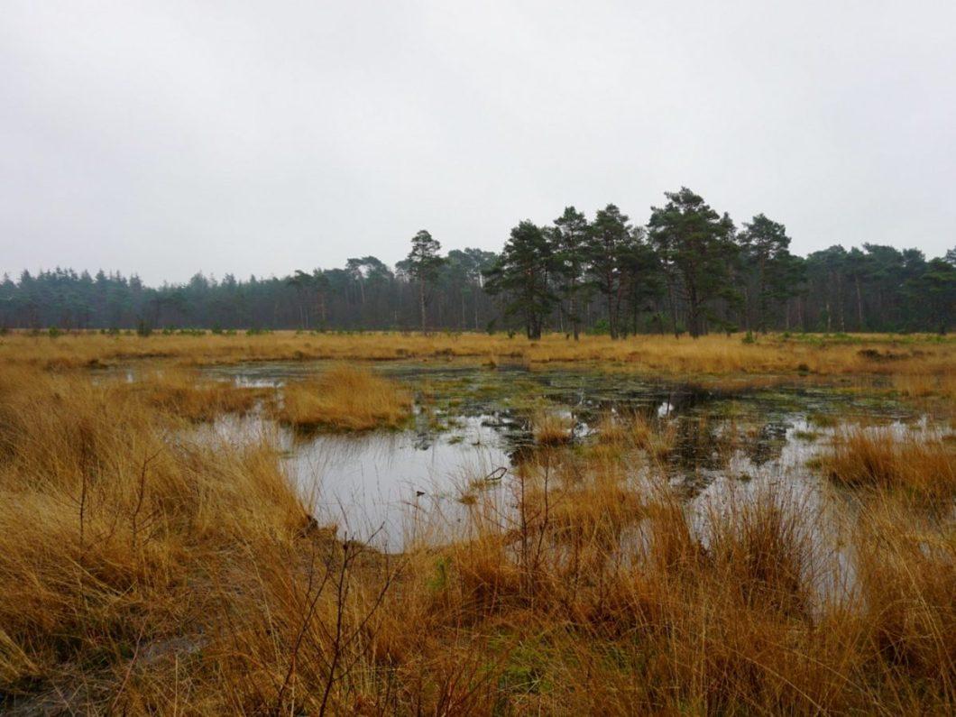 Hazenwater - Heuvelrugroute Amersfoort
