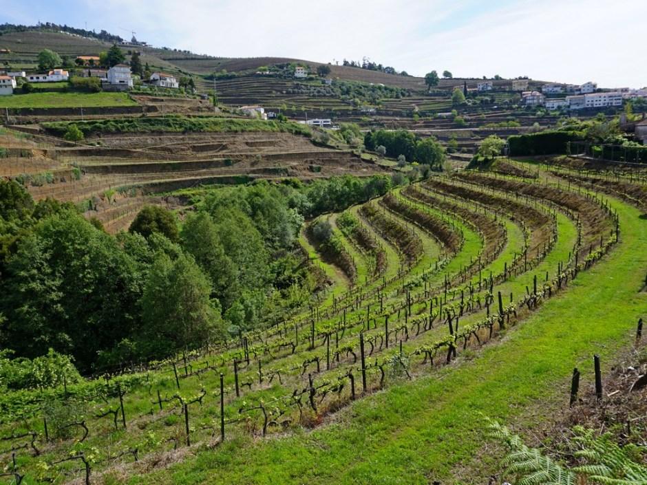 Wijngaarden Mesao Frio