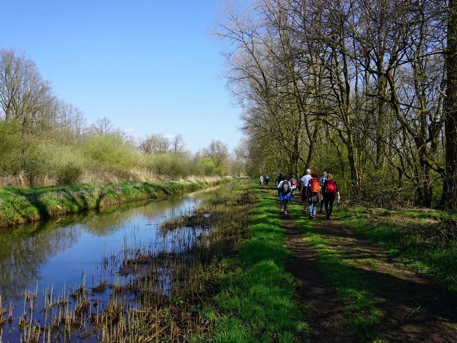 Langs het kanaal - Boswandeling Stramproy Wanda Wandelt