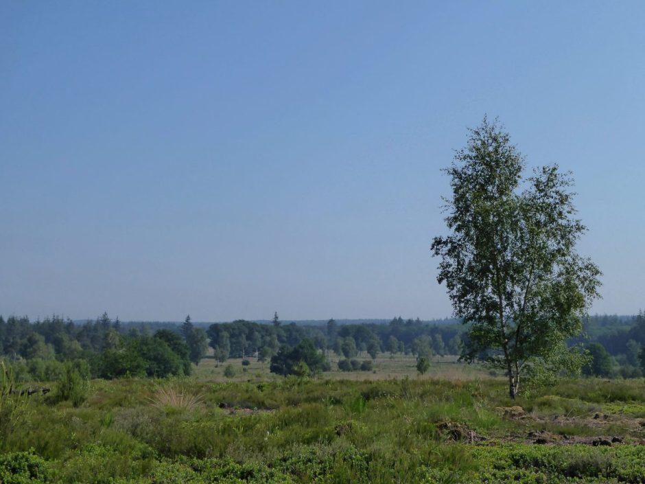 Uitzicht vanaf de Haalerberg - Sallandse Zandloper