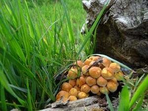In de herfst kom je veel paddenstoelen tegen op de route